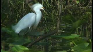 Wildlife in Everglades National Park - DVD