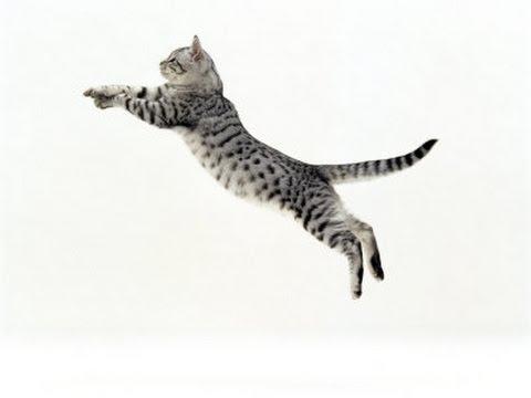 Gatos y velocidad terminal