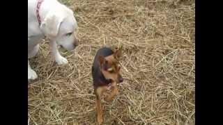 Dog Training In Ulster/orange County, New York
