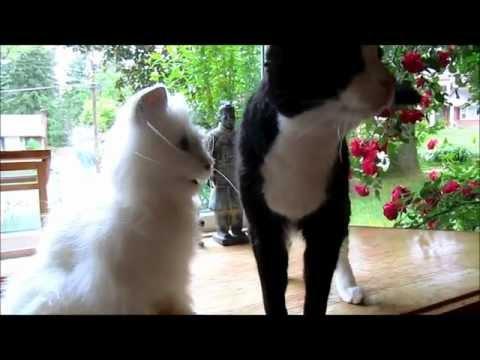 FurReal Robotic Cat Meets Real Cat