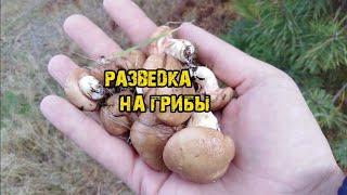 ???? ???? ???? За грибами на разведку ???? ????????