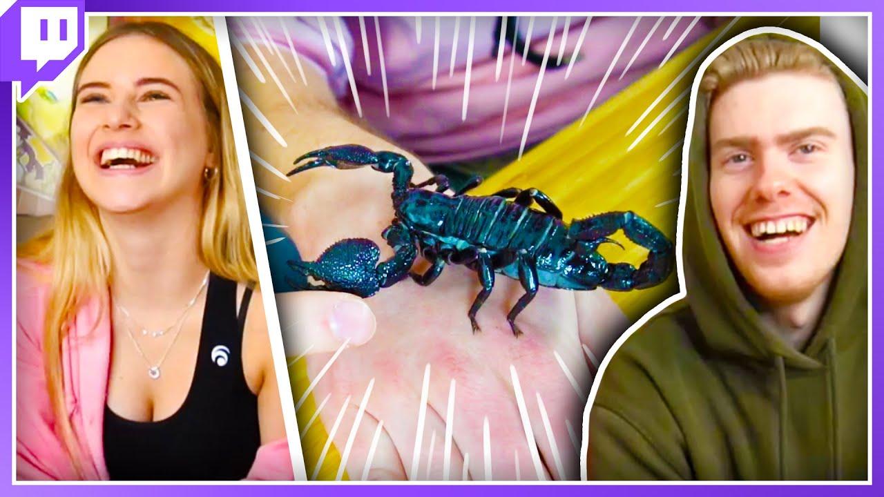 Insekten AUF UNS krabbeln lassen!😱 - Meine erste Live auf Twitch mit Adi und Misabell