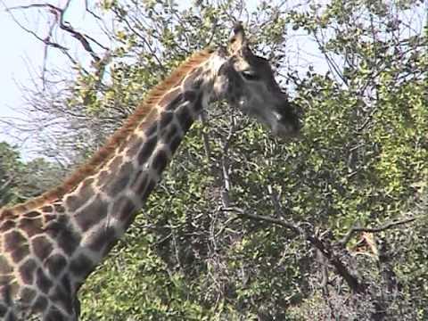 Botswana Mobile Safaris - © Abendsonne Afrika