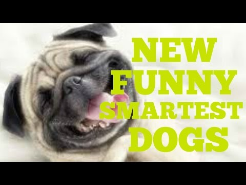 Funny Smart Dogs Compilation   Funny Animal Video 2016