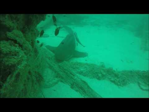 MV Dara Wreck - BSAC 406 - Part2