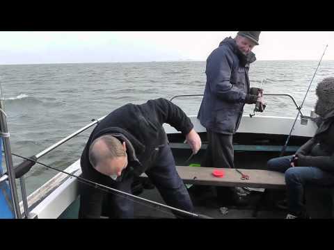 Disgorging Flatfish