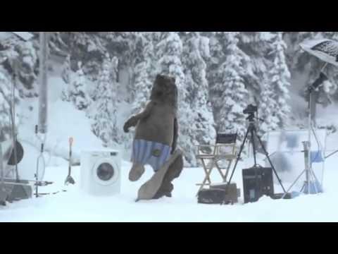 Un Ours s'invite sur le tournage d'une pub