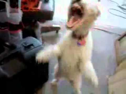 Dog Takes In Some Helium And Goes Crazy With It