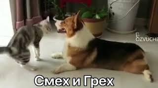 ,,смех и грех'' короткое смешное видео