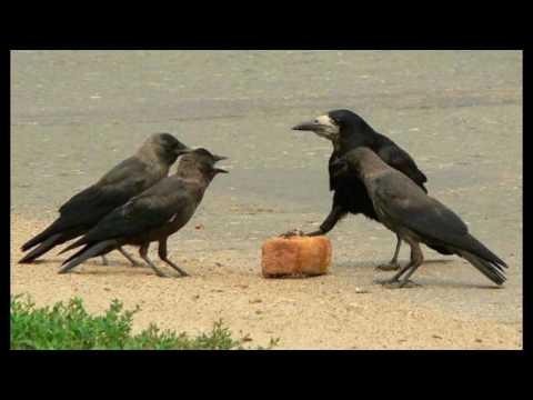 Смешные птицы : Юмор - Страница 3