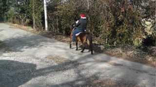 Bay Saddle Pony Riding Double