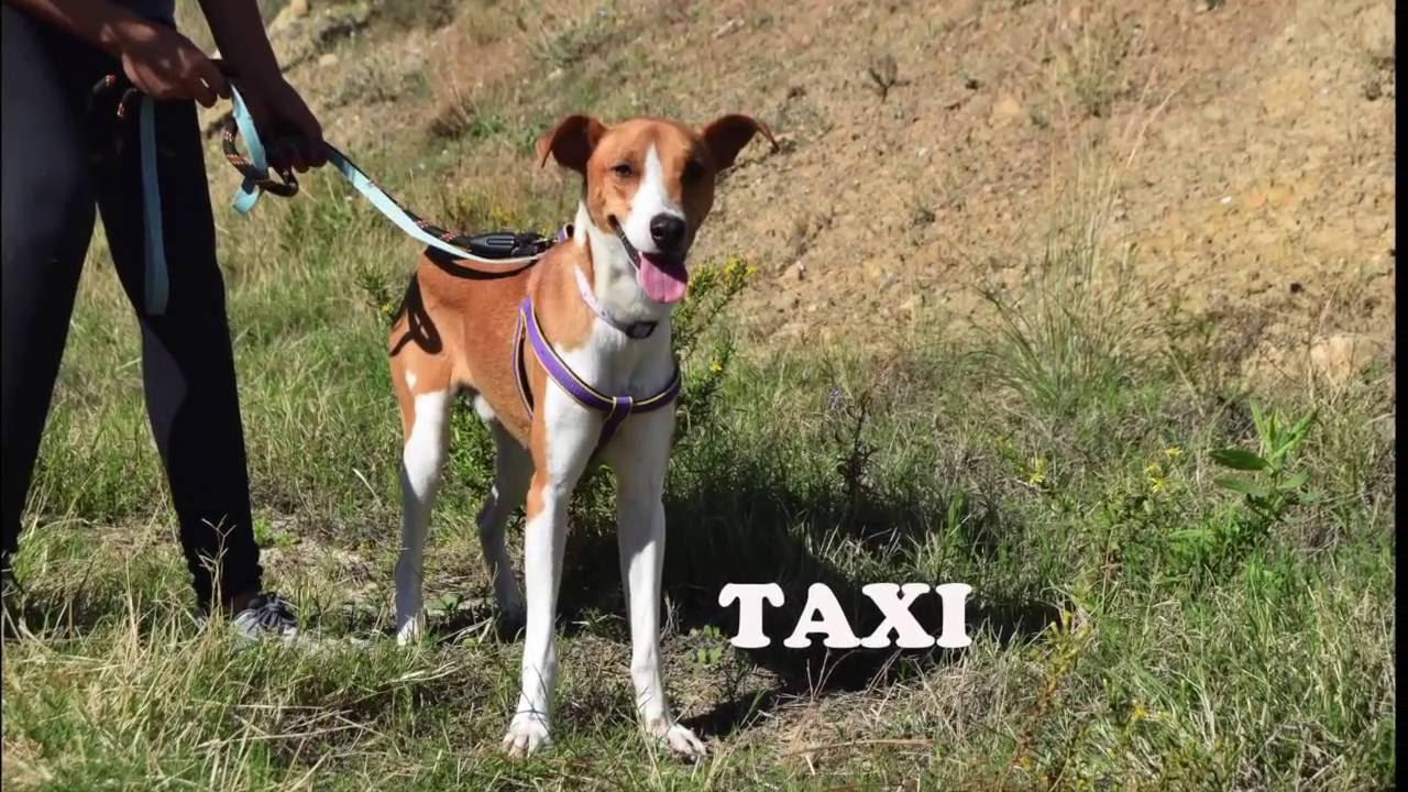 Taxi protectora de animales y plantas de m laga youtube for Protectora de animales malaga ciudad jardin