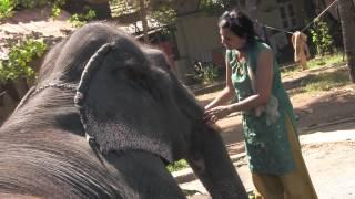 The Elephant Who Stole My Heart