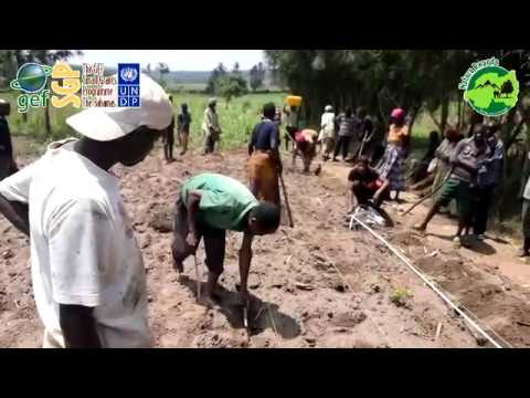 CF for Climate Change  Resilience for small scale farmers around Akanyaru Wetlands. Episode 1