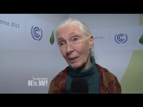 Jane Goodall on the Threat of Animal Agriculture, GOP Climate Change Denial & Why She's a Vegetarian