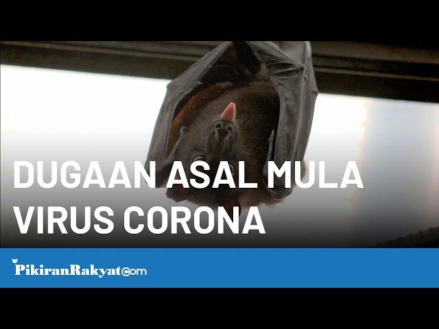 Dugaan Asal Mula Virus Corona di Tiongkok yang Menyebar ke Seluruh Negara Asia