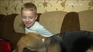 Домашние животные и аллергия на шерсть. Что делать?