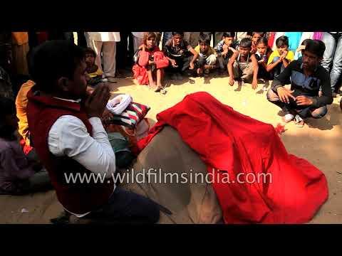 Street performer shows magic show in Pushkar fair