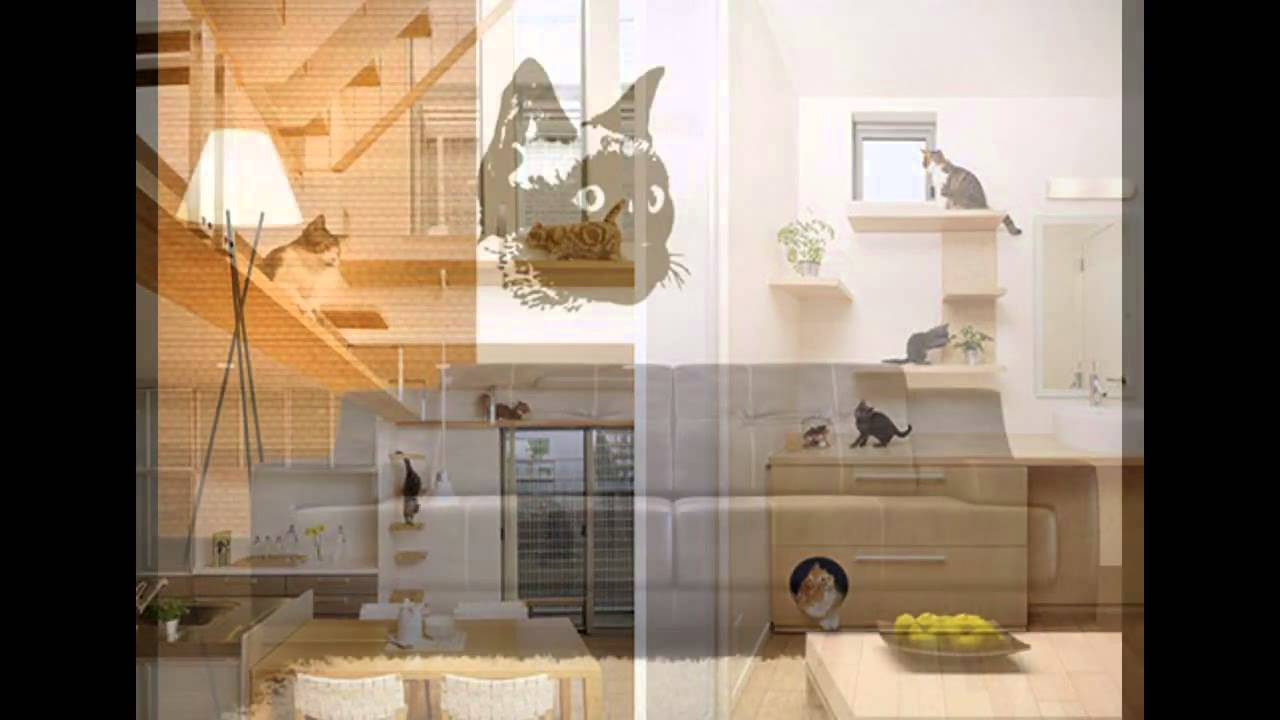 Cat Room Decorations Ideas Youtube