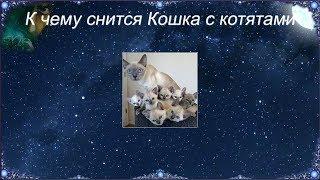 К чему снится Кошка с котятами (Сонник)