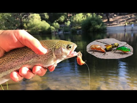 Lure Fishing Marilyn's Pond-Catching Trout In Reno NV