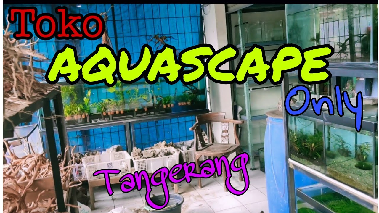 TOKO KHUSUS AQUASCAPE DI TANGERANG - YouTube