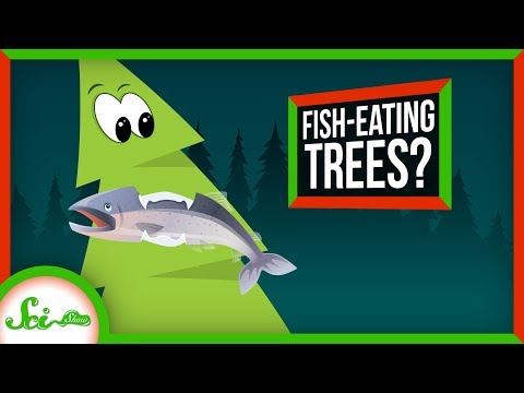 these-trees-eat-salmon!