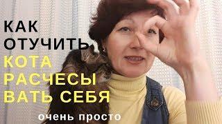 как отучить кота расчесывать себя ОЧЕНЬ ПРОСТО