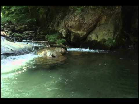 Tsurunuma River (Fukushima prefecture) 福島県鶴沼川 Part 2