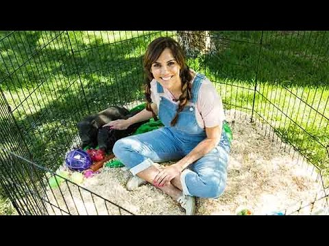 The Pros And Cons Of Pig Parenting With Pet Expert Laura Nativo - Home & Family