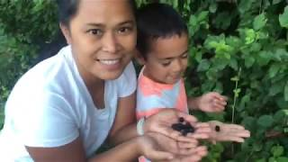 Picking Wild Blackberries As A Family On Our Homestead