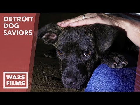 Hidden Cameras Help Dog Saviors Rescue Starving Puppy + Happy Ending - Hope For Dogs Like My DoDo
