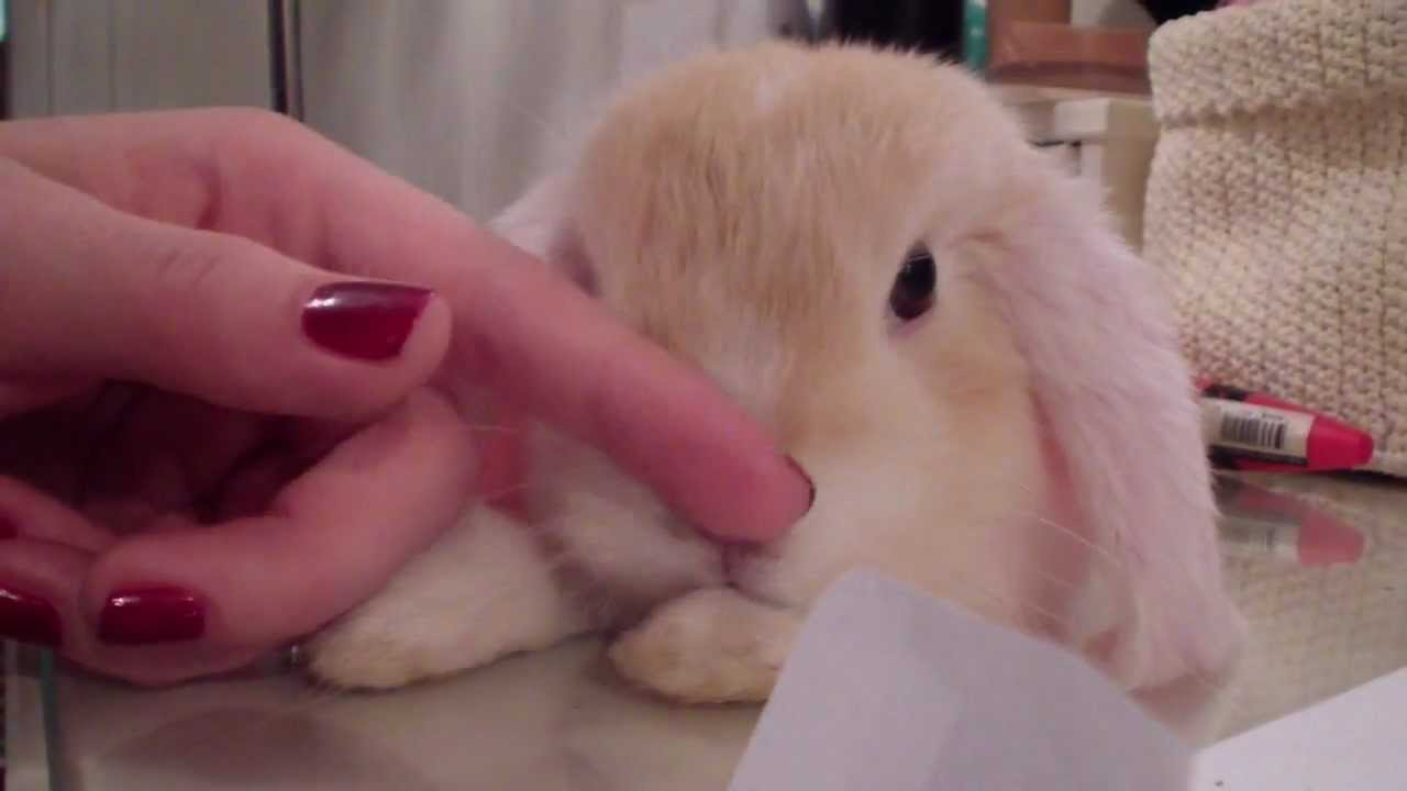 pet rabbit likes and dislikes in a relationship