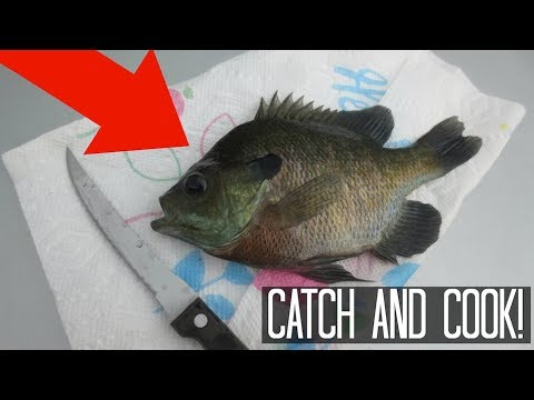 Catch & Cook - BLUEGILL! First time tasting!!