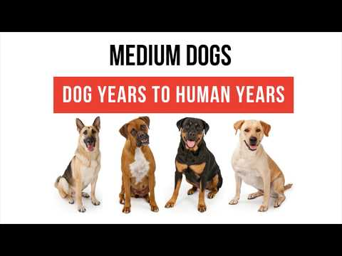 Medium Dog Years to Human Years