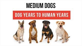 Dog Age Calculator for Medium Sized Dogs