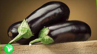 БАКЛАЖАНЫ – польза и вред для здоровья. Как часто можно кушать баклажаны?