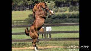 Красивые фото лошадей!