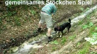 21 Spiele zur Festigung der Hund-Mensch Bindung mit Hund/Entlebucher Sennenhund Lucy Hundetraining