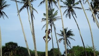 Шри-Ланка. Полный видео-отзыв. Часть 5/8