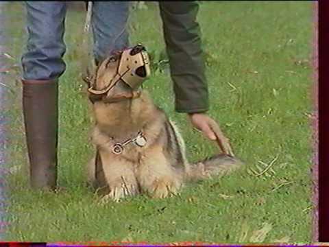 L' education d' un chien par son maitre (Partie 2)
