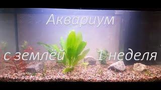 Аквариум на грунте для кактусов (первая неделя, желтая вода)