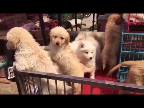 Pets Market - Dalian, China