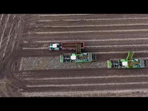 Ue: Perché l'agricoltura bio resta un sogno che fatica a decollare?