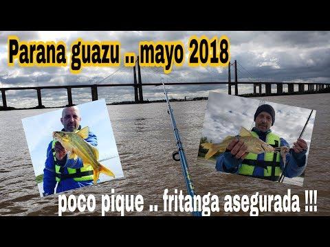 Parana guazu..mayo 2018..poco pique !!!