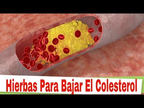 hierbas para bajar el colesterol cuatro hierbas para