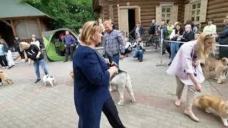 """Международная выставка собак,""""Кинолог"""" в Витебске, 26.05.2019 года(13)"""