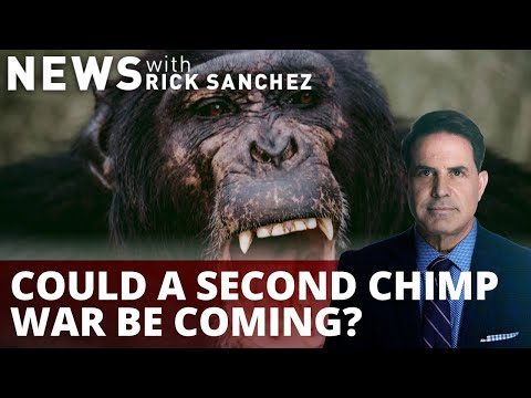 Researchers shocked as chimps attack and kill gorillas. What's it say about us?