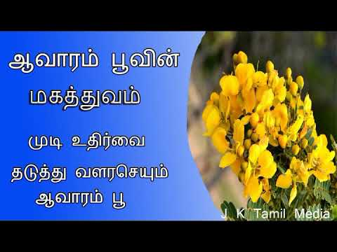 Avarampoo Benefits For Skin & Health in Tamil