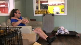 Aggressive Dog Rehab, Daily Training